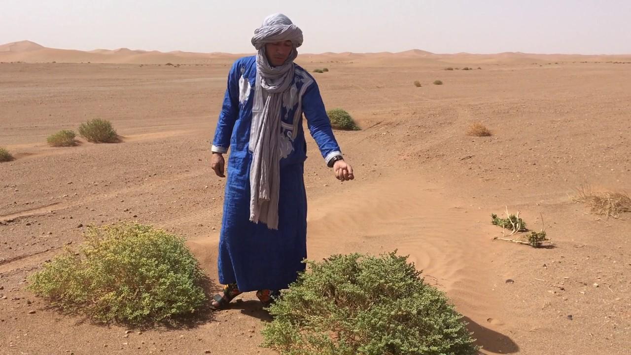 Erg Chigaga Morocco
